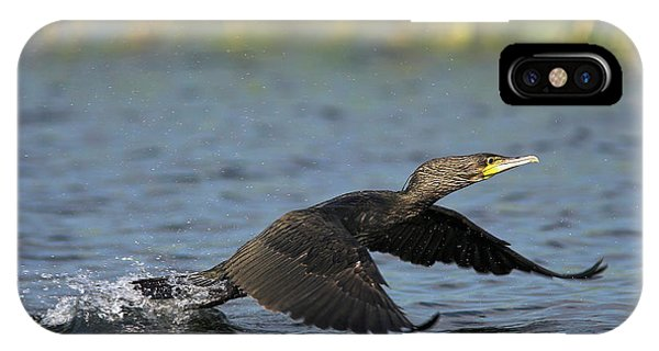 Migratory Birds iPhone Case - Eurasian Cormorant (phalacrocorax Carbo by Martin Zwick