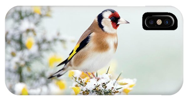 European Goldfinch Phone Case by John Devries/science Photo Library