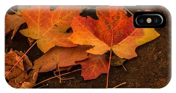 West Fork Fallen Leaves IPhone Case