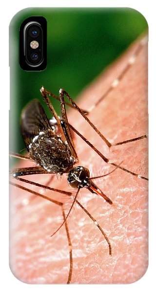 Feeding Mosquito Phone Case by Cdc/science Photo Library