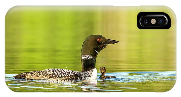 Loon iPhone Case - Female Common Loon With Newborn Chick by Chuck Haney