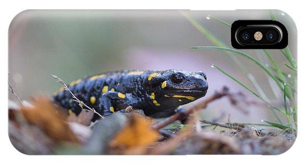 Fire Salamander - Salamandra Salamandra IPhone Case