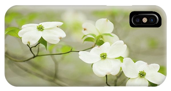 iPhone Case - Flowering Dogwood (cornus Florida) by Maria Mosolova/science Photo Library