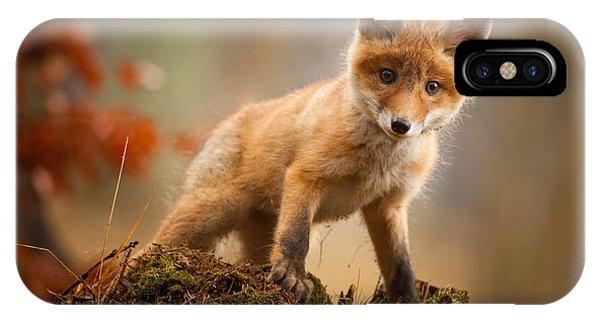 Cute iPhone Case - Fox by Robert Adamec