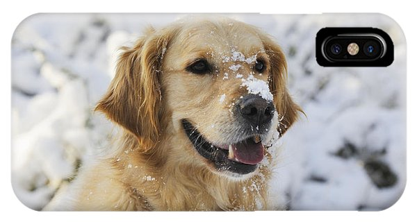 Golden Retriever In Snow IPhone Case