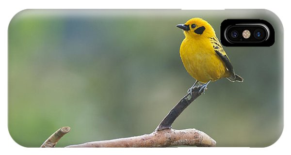 Golden Tanager IPhone Case