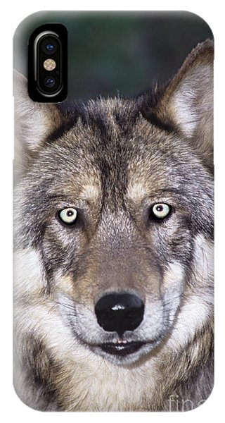 IPhone Case featuring the photograph Gray Wolf Portrait Endangered Species Wildlife Rescue by Dave Welling