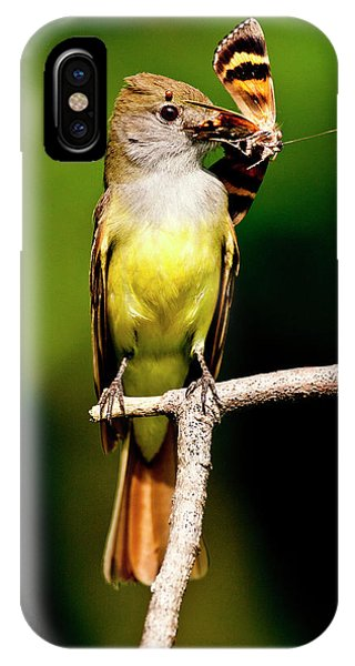 Flycatcher iPhone Case - Great Crested Flycatcher Myiarchus by David Northcott