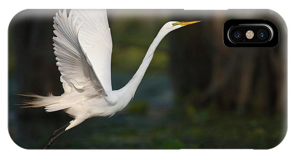 Bald Cypress iPhone Case - Great Egret (ardea Alba by Larry Ditto