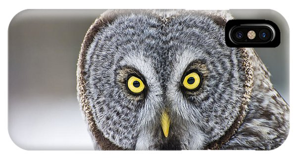 Great Gray Owl Portrait IPhone Case
