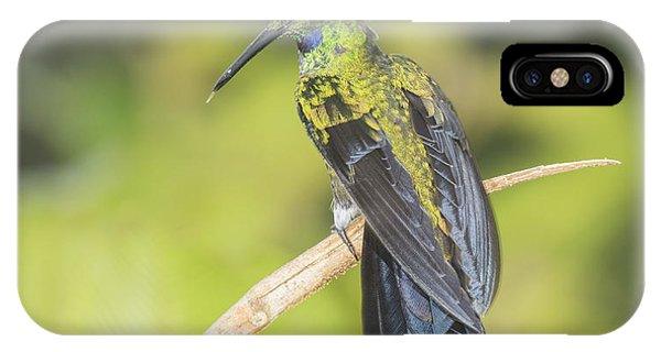 Green-crowned Brilliant Hummingbird IPhone Case