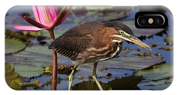 Green Heron Photo IPhone Case