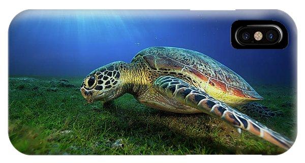 Green Turtle Phone Case by Barathieu Gabriel