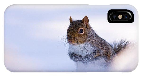 Grey Squirrel In Snow IPhone Case