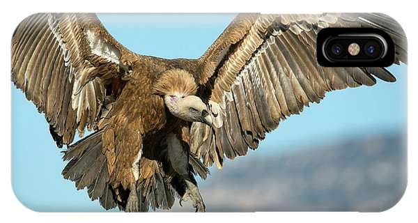 Griffon Vulture Flying IPhone Case