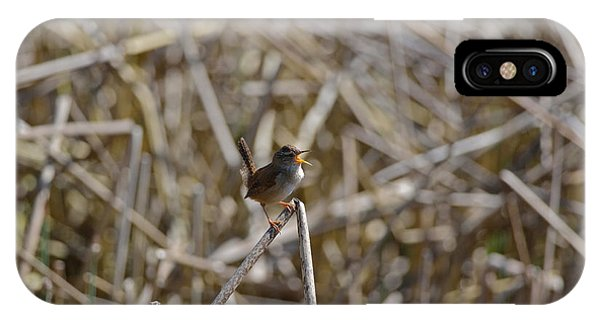 Here I Am - Marsh Wren IPhone Case