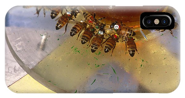 Pterygota iPhone Case - Honeybees by James L. Amos
