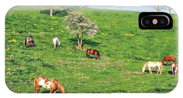 Horse Pasture IPhone Case