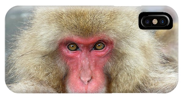 Adapted iPhone Case - Japanese Macaque by Dr P. Marazzi