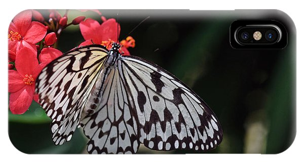Large Tree Nymph Butterfly IPhone Case