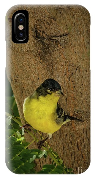 Sangre De Cristo iPhone Case - Lesser Goldfinch by Robert Bales