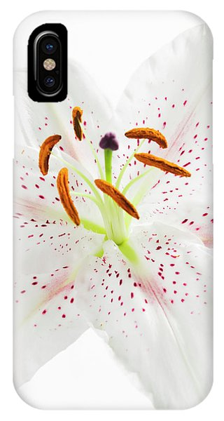 Stamen iPhone Case - Lily Flower Reproduction by Gustoimages/science Photo Library