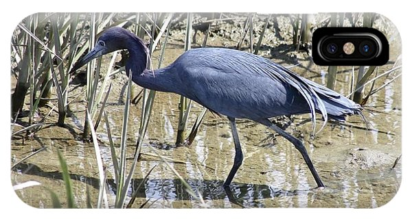 Little Blue Heron IPhone Case