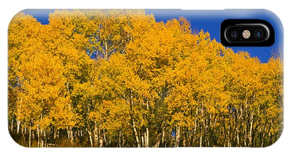 San Miguel iPhone Case - Low Angle View Of Aspen Trees by Panoramic Images