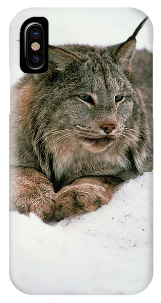 Lynx iPhone Case - Lynx In Snow by William Ervin/science Photo Library