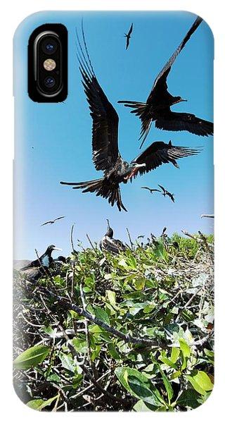 Magnificent Frigatebirds Phone Case by Christopher Swann