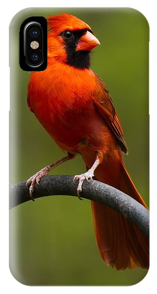 Male Cardinal IPhone Case
