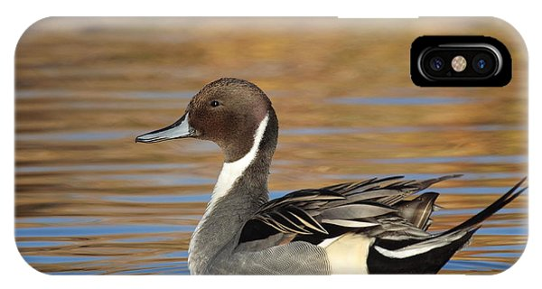Male Pintail IPhone Case