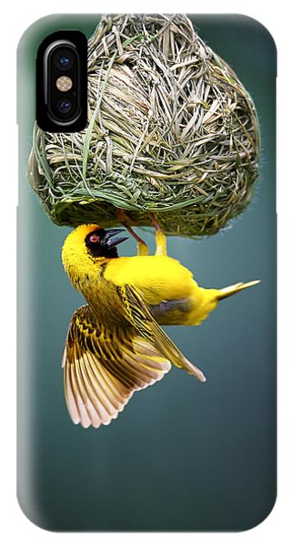 Working iPhone Case - Masked Weaver At Nest by Johan Swanepoel