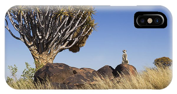 Meerkat iPhone Case - Meerkat In Quiver Tree Grassland by Vincent Grafhorst