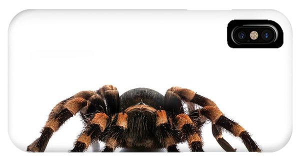 Mexican Redknee Tarantula Phone Case by Science Photo Library