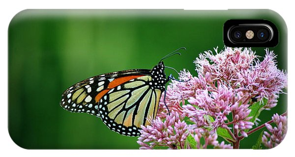 Monarch In Light  IPhone Case