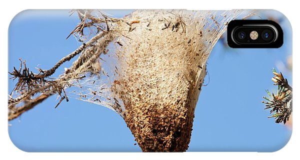 Nests Of Pine Processionary Caterpillar IPhone Case