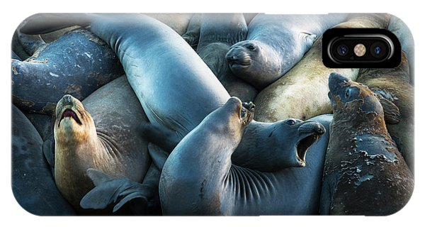 Northern Elephant Seals At Piedras Phone Case by Russ Bishop