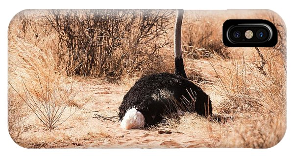 Behaviour iPhone Case - Ostrich Struthio Camelus by Photostock-israel