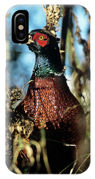 iPhone Case - Pheasant by Duncan Shaw/science Photo Library