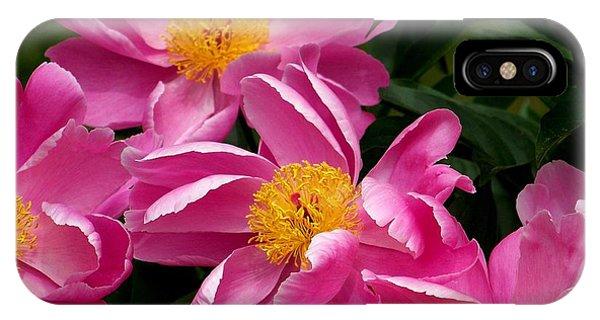 Pink Petals IPhone Case