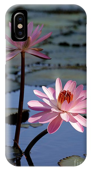 Pink Water Lily In The Spotlight IPhone Case