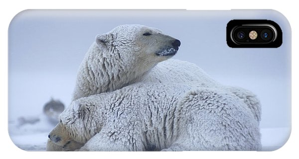 Winter iPhone Case - Polar Bear Sow With Cub Resting by Steven Kazlowski