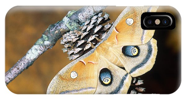 Pterygota iPhone Case - Polyphemus Moth by Millard H. Sharp
