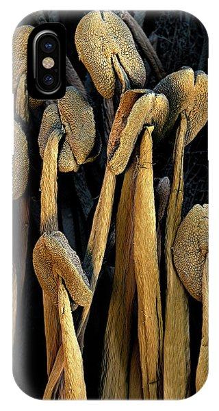 Stamen iPhone Case - Raspberry Stamens by Stefan Diller