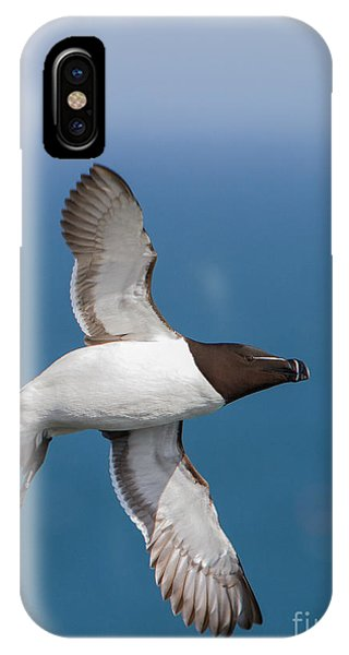 Razorbill Alca Torda  IPhone Case