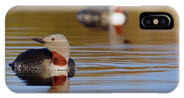 Loon iPhone Case - Red-throated Loon Pair by Ken Archer