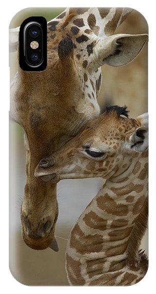 Rothschild Giraffe And Calf IPhone Case