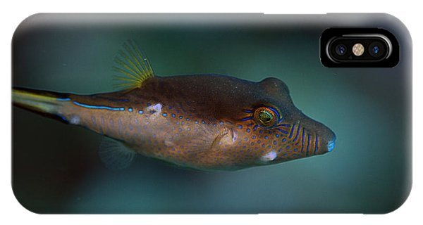 Sharpnose Puffer IPhone Case