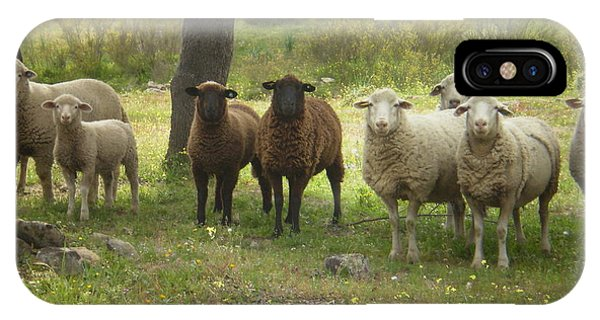 Sheep In Extremadura IPhone Case